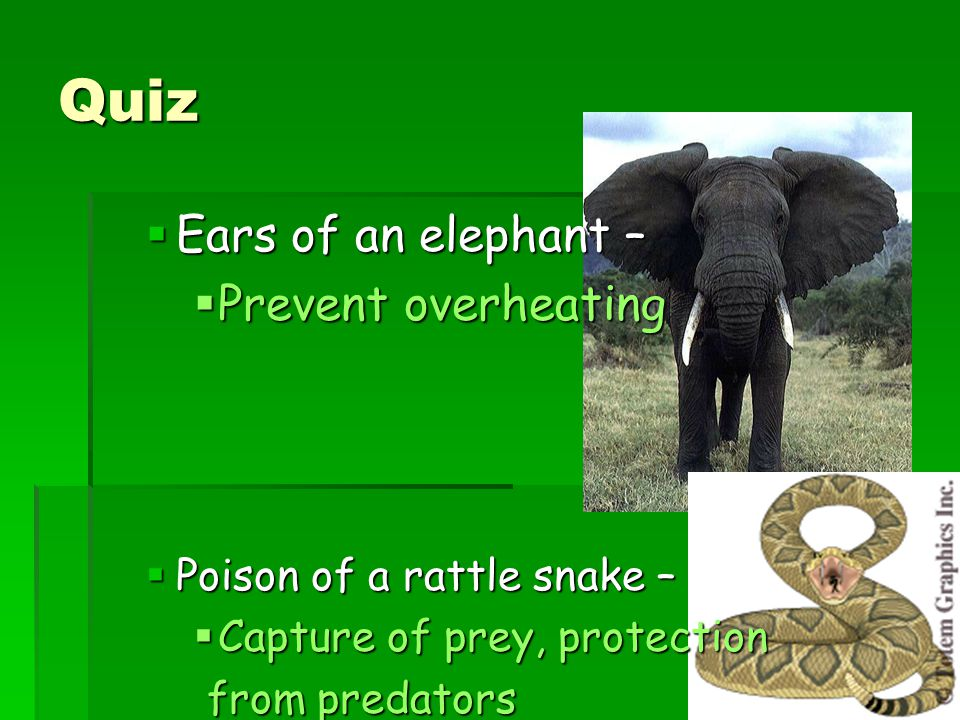 Quiz Ears of an elephant – Prevent overheating