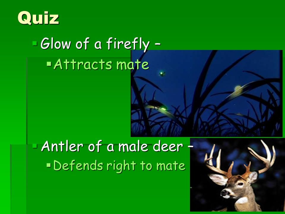 Quiz Glow of a firefly – Attracts mate Antler of a male deer –