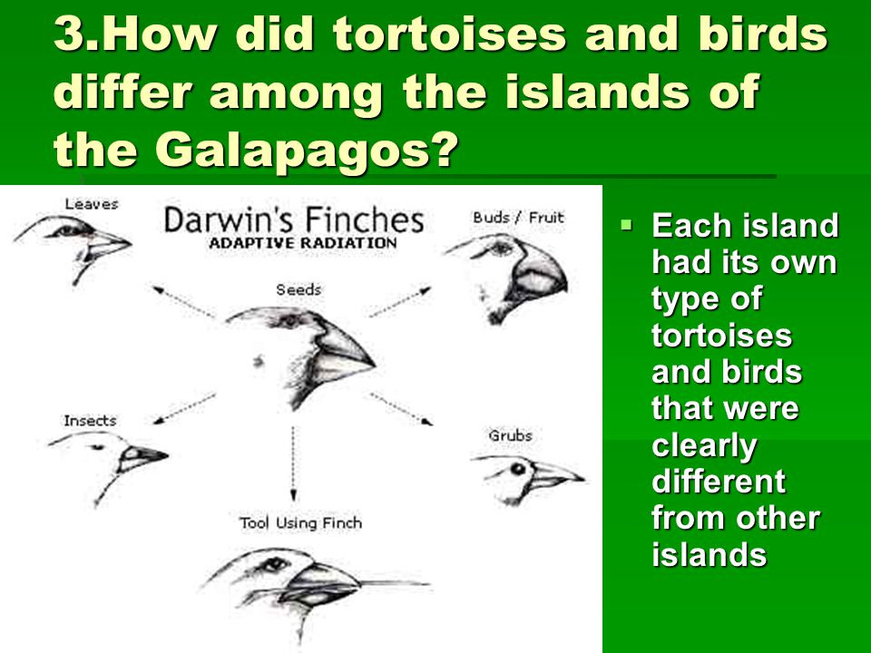 3.How did tortoises and birds differ among the islands of the Galapagos
