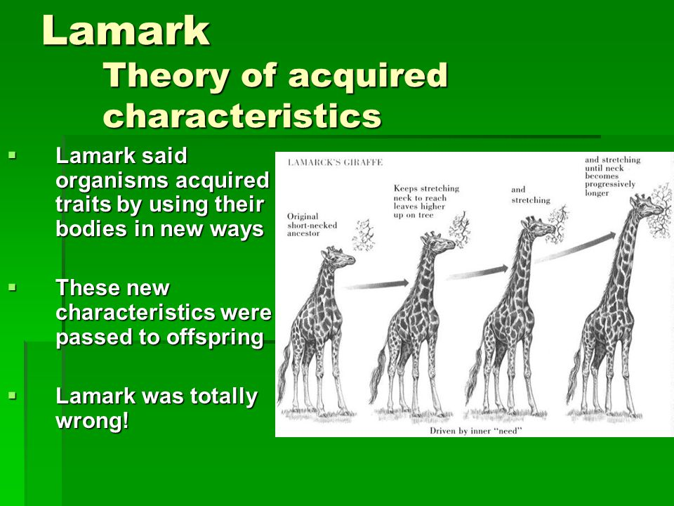 Lamark Theory of acquired characteristics