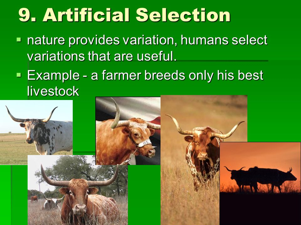 9. Artificial Selection nature provides variation, humans select variations that are useful.