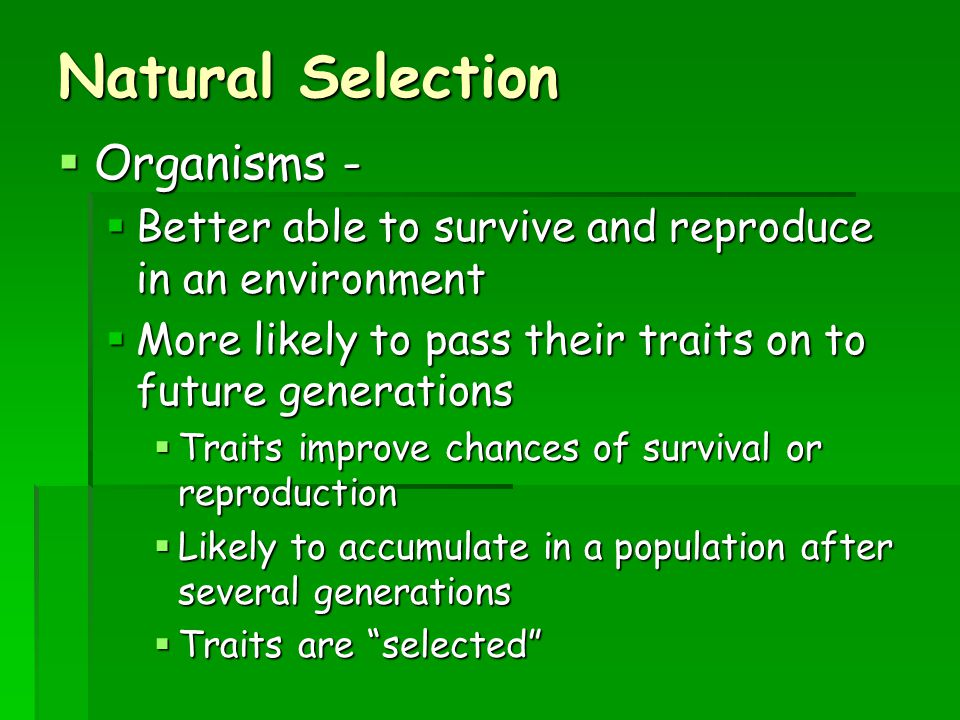 Natural Selection Organisms -