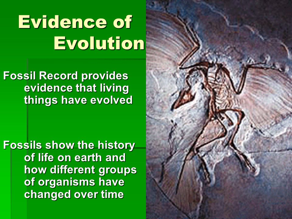 Evidence of Evolution Fossil Record provides evidence that living things have evolved.