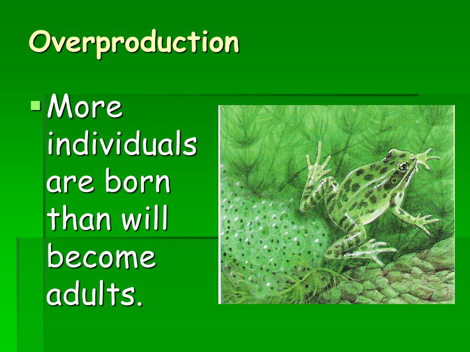 More individuals are born than will become adults.