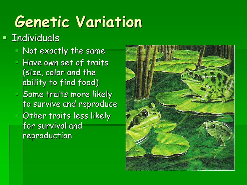 Genetic Variation Individuals Not exactly the same