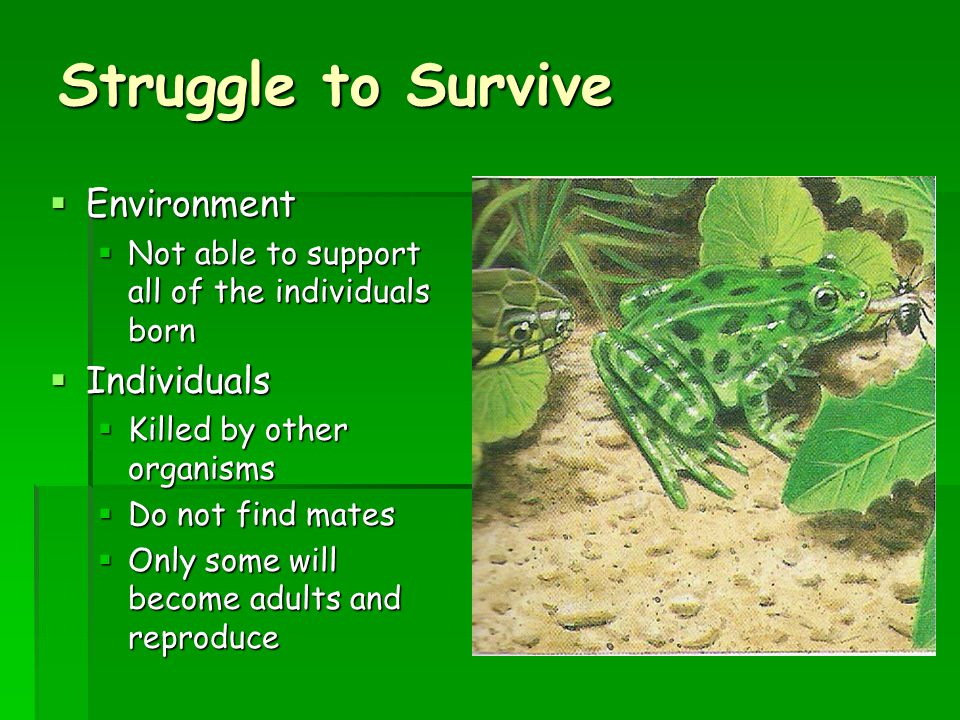 Struggle to Survive Environment Individuals