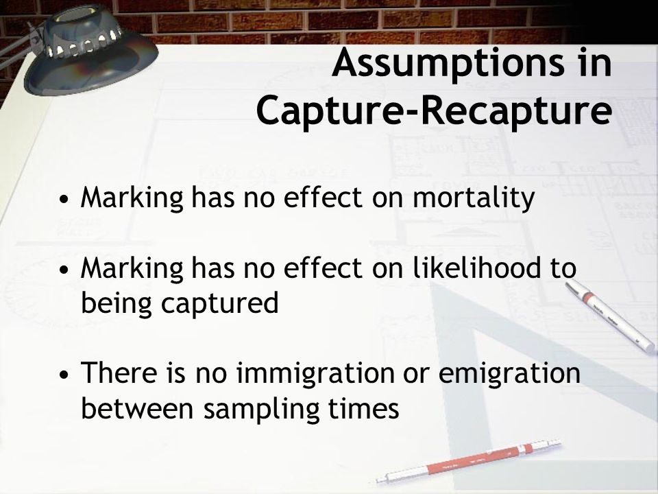 Assumptions in Capture-Recapture