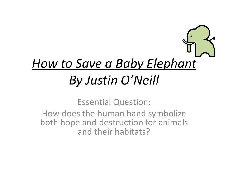 How to Save a Baby Elephant By Justin O'Neill