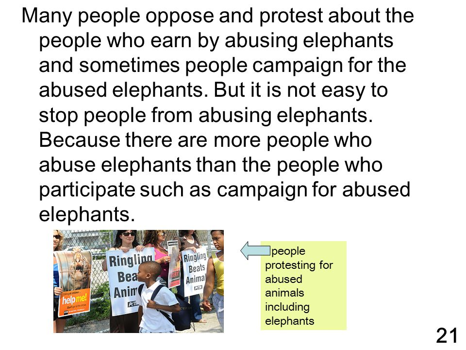Many people oppose and protest about the people who earn by abusing elephants and sometimes people campaign for the abused elephants. But it is not easy to stop people from abusing elephants. Because there are more people who abuse elephants than the people who participate such as campaign for abused elephants.