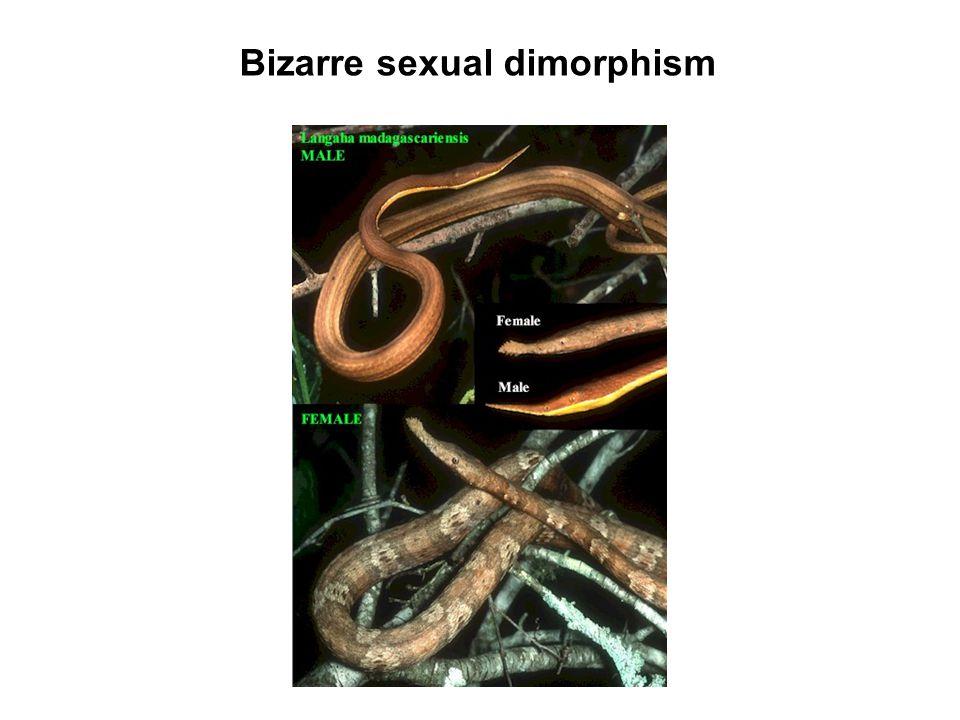 Bizarre sexual dimorphism