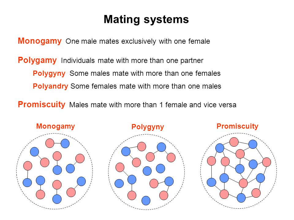 Mating systems Monogamy One male mates exclusively with one female