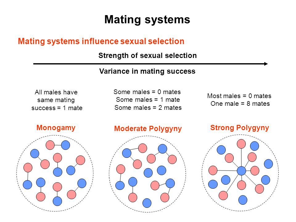 Mating systems Mating systems influence sexual selection