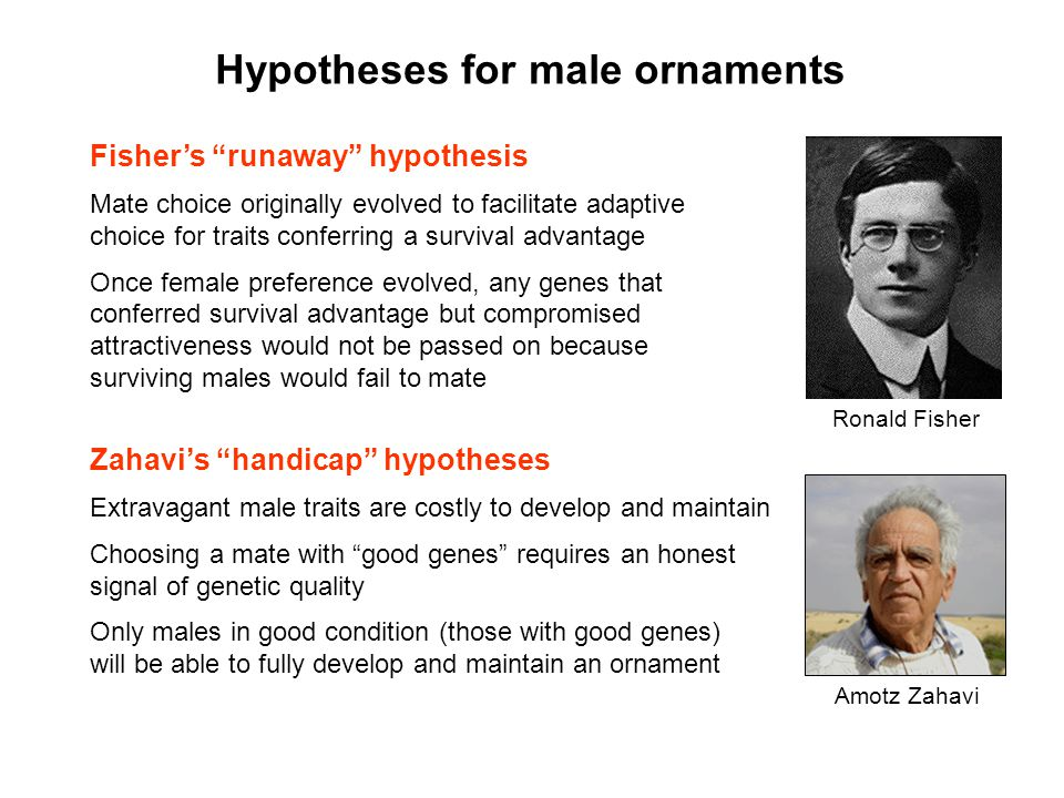 Hypotheses for male ornaments