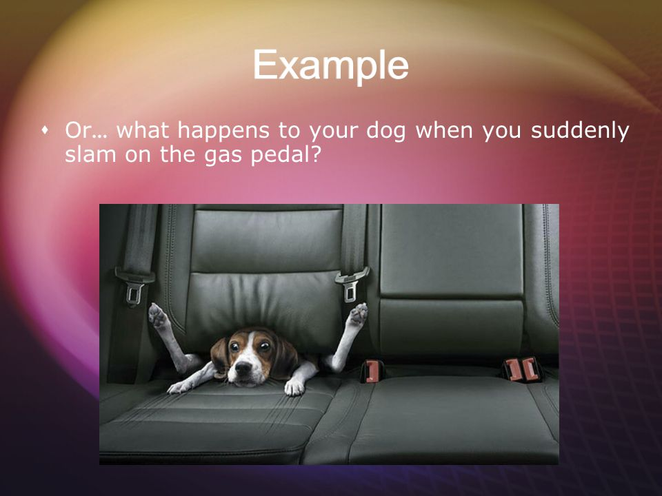 Example Or… what happens to your dog when you suddenly slam on the gas pedal