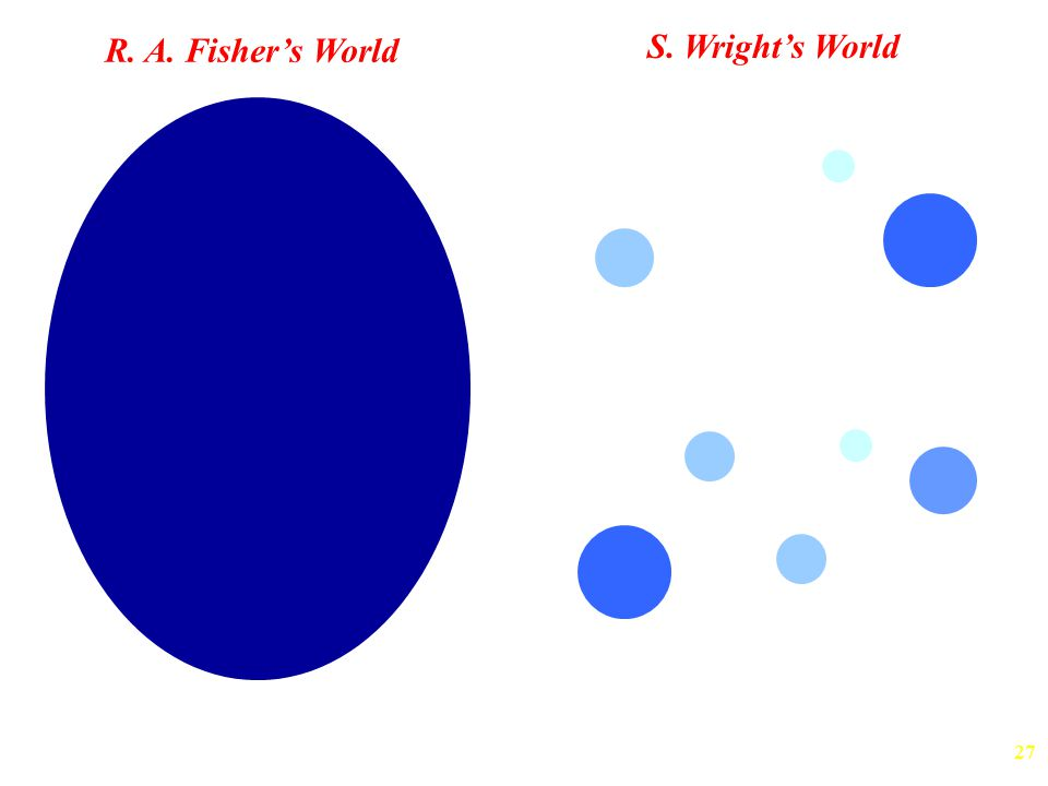 R. A. Fisher's World S. Wright's World Large, Panmictic Populations Metapopulation
