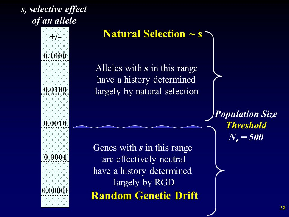 Natural Selection ~ s Random Genetic Drift s, selective effect