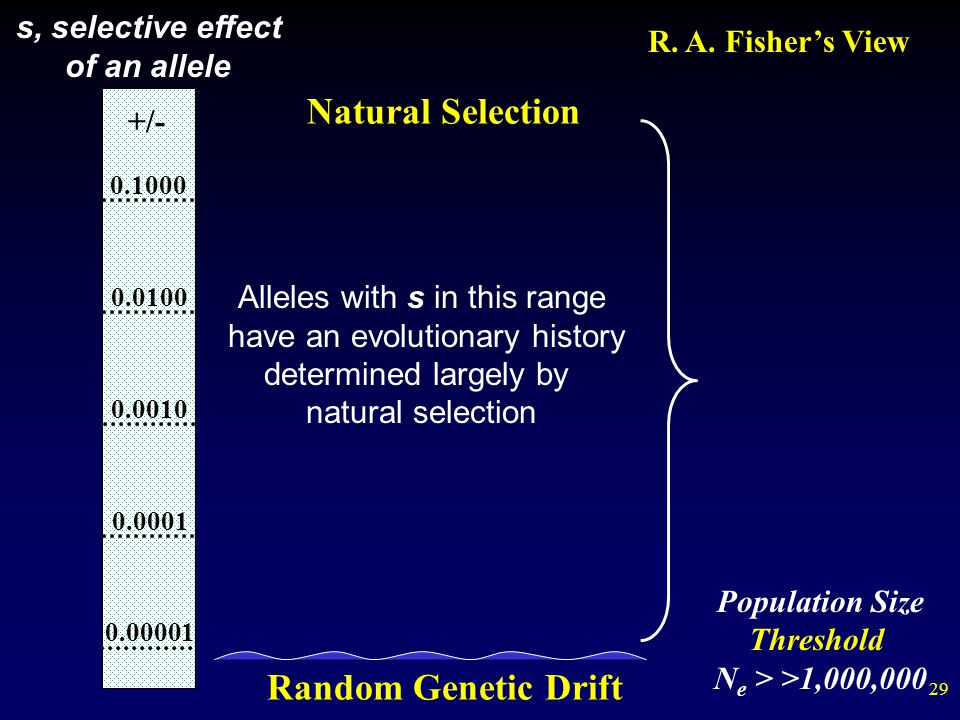 Natural Selection Random Genetic Drift s, selective effect