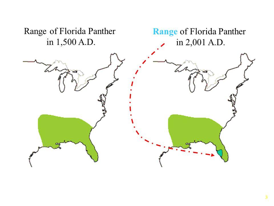 Range of Florida Panther in 1,500 A.D. Range of Florida Panther