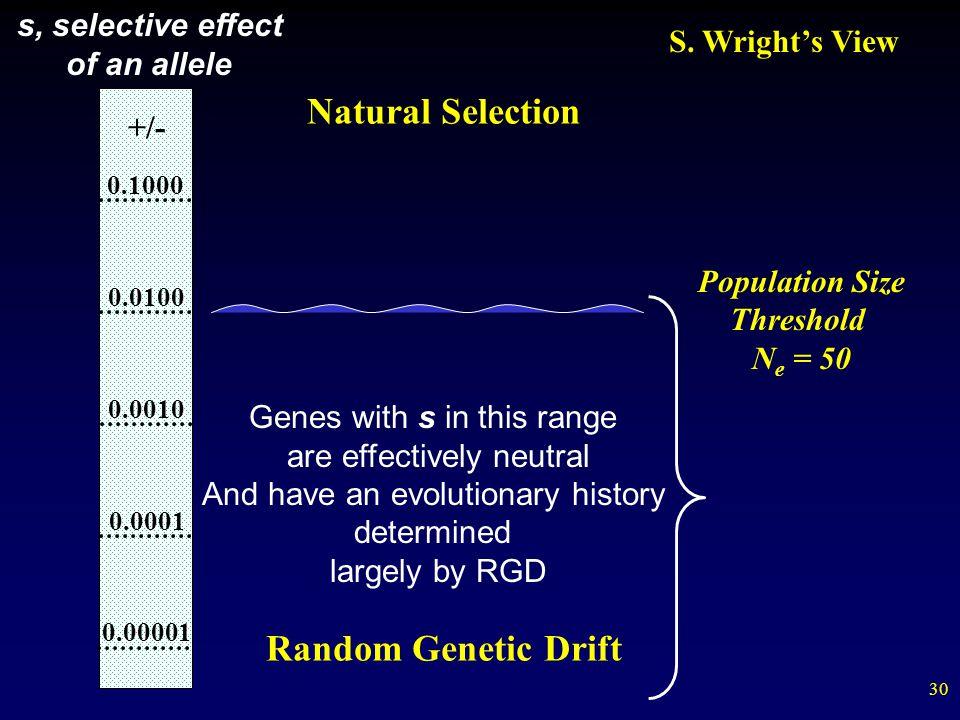 Natural Selection Random Genetic Drift s, selective effect