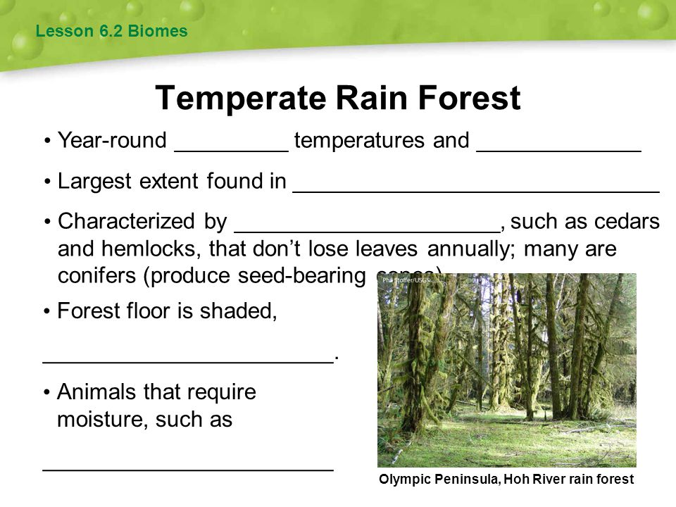 Lesson 6.2 Biomes Temperate Rain Forest. Year-round _________ temperatures and _____________. Largest extent found in _____________________________.