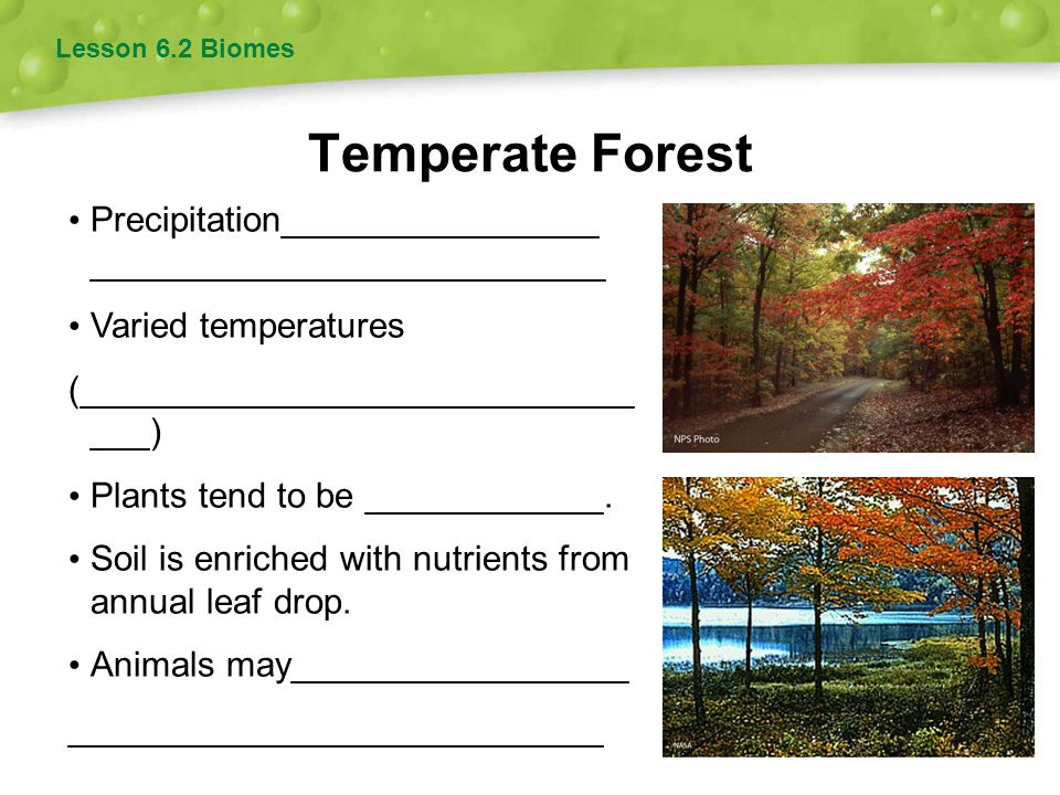 Lesson 6.2 Biomes Temperate Forest. Precipitation________________ __________________________. Varied temperatures.