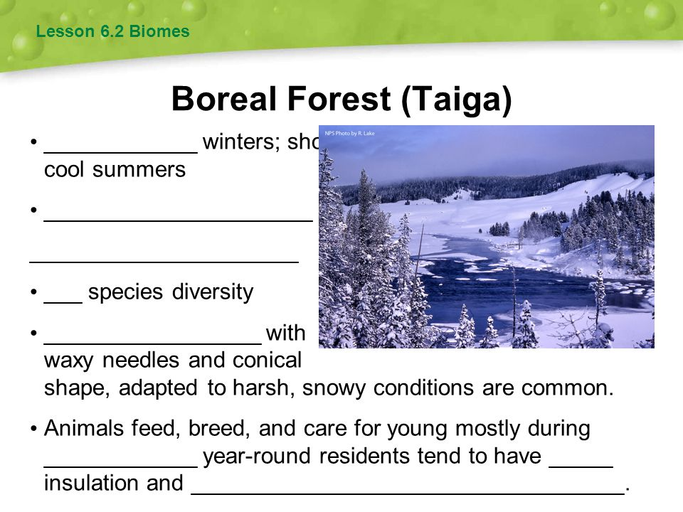 Boreal Forest (Taiga) ____________ winters; short, cool summers