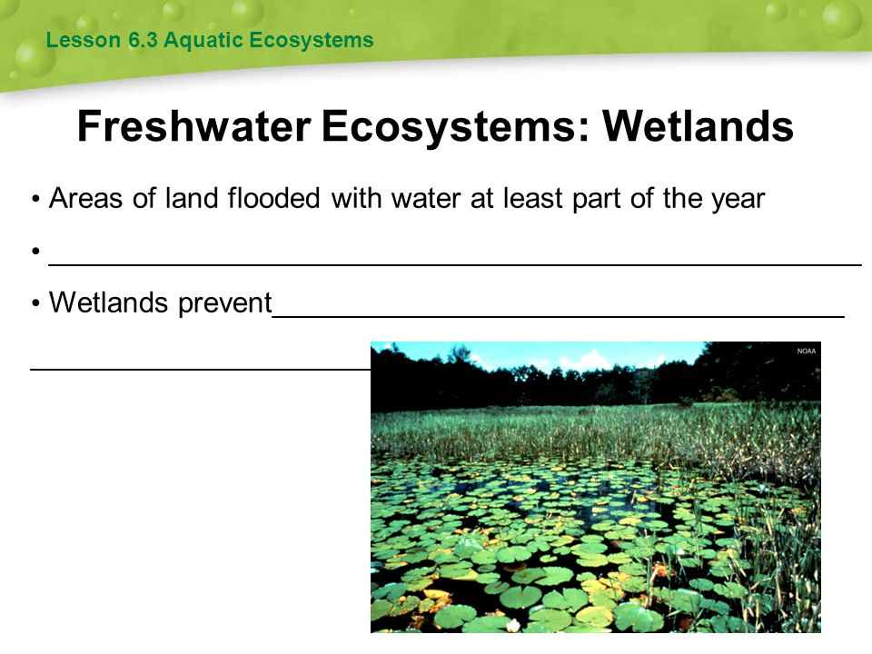 Freshwater Ecosystems: Wetlands