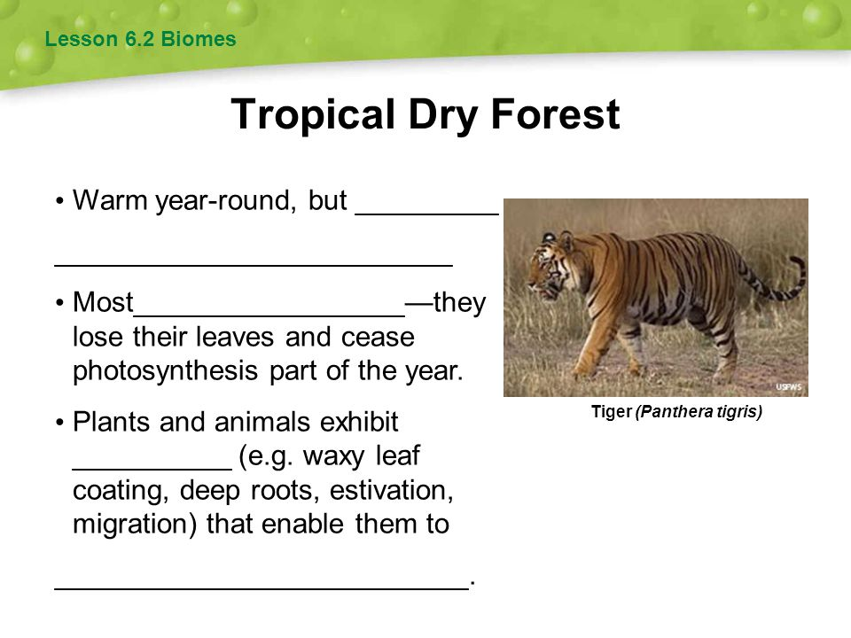 Tropical Dry Forest Warm year-round, but _________
