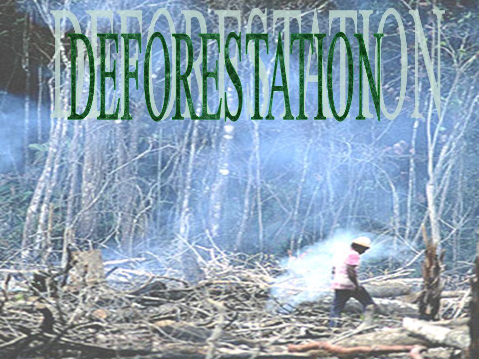 DEFORESTATION S Sa