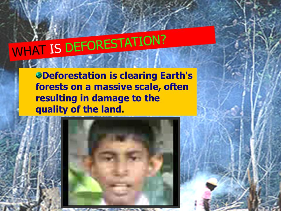 WHAT IS DEFORESTATION.