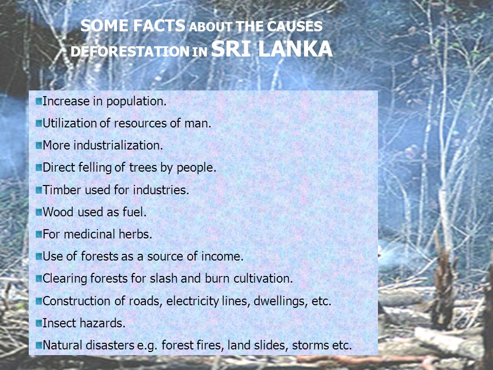 SOME FACTS ABOUT THE CAUSES DEFORESTATION IN SRI LANKA