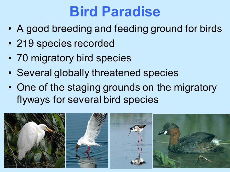 Bird Paradise A good breeding and feeding ground for birds