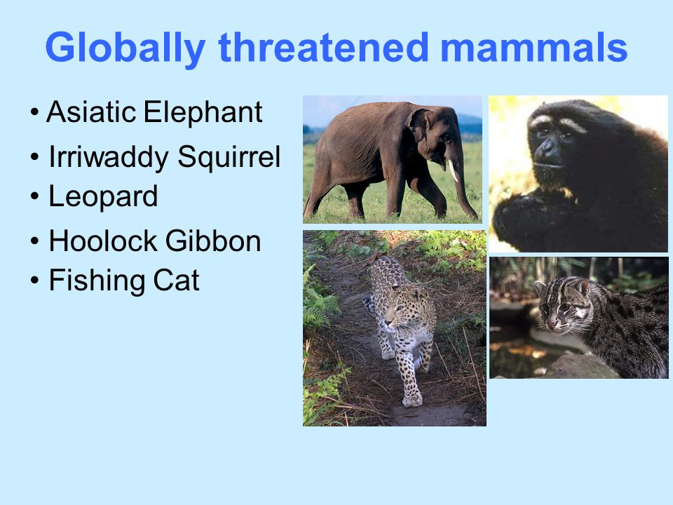 Globally threatened mammals