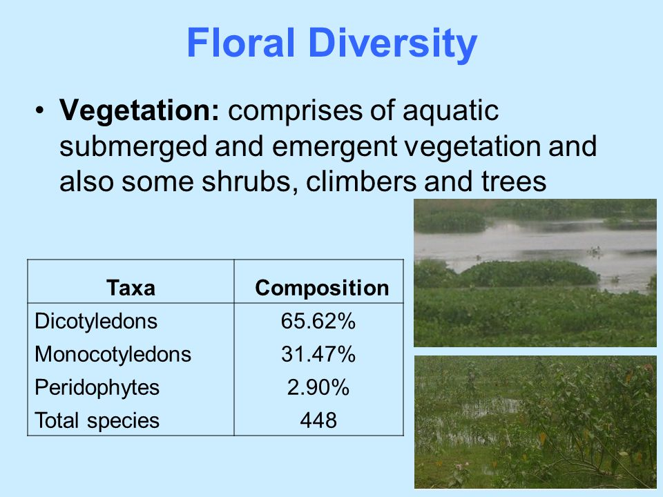 Floral Diversity Vegetation: comprises of aquatic submerged and emergent vegetation and also some shrubs, climbers and trees.