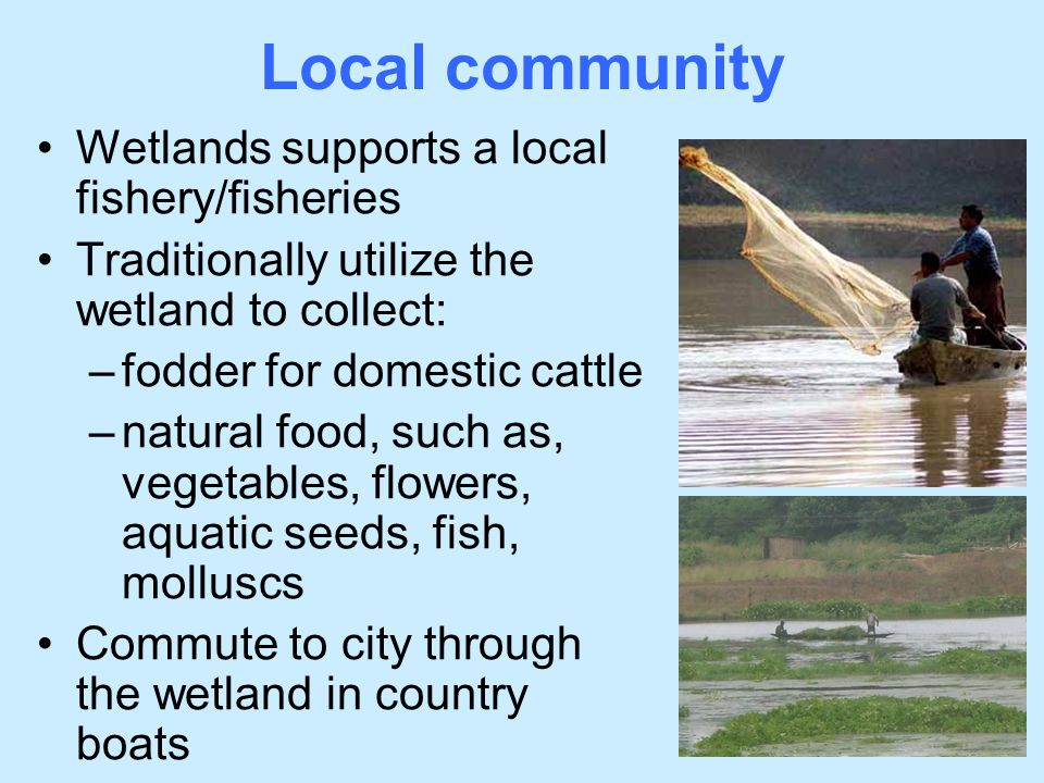 Local community Wetlands supports a local fishery/fisheries