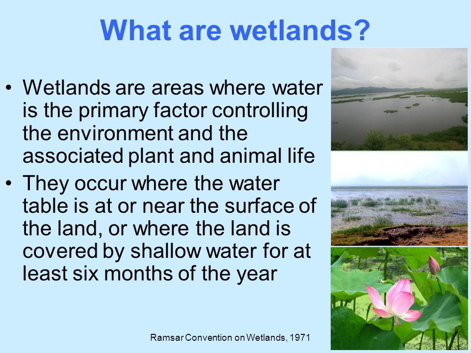 What are wetlands Wetlands are areas where water is the primary factor controlling the environment and the associated plant and animal life.