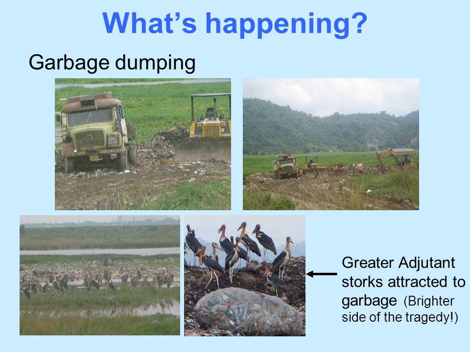 What's happening Garbage dumping