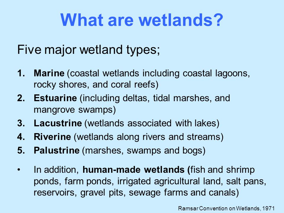 What are wetlands Five major wetland types;