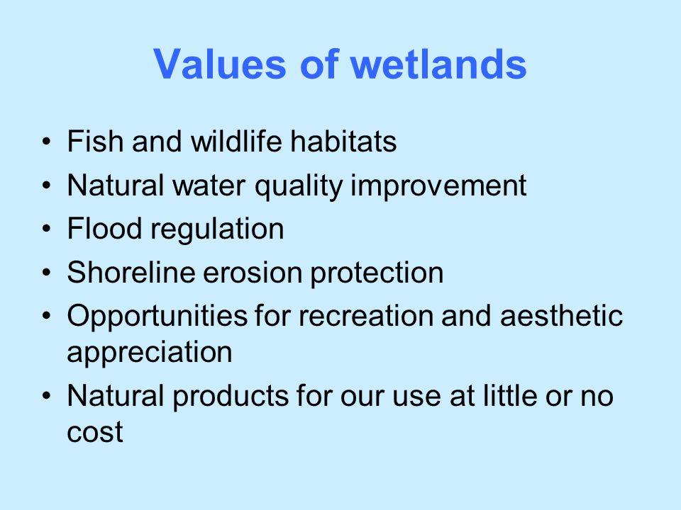 Values of wetlands Fish and wildlife habitats