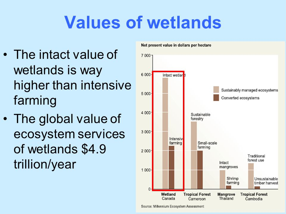 Values of wetlands The intact value of wetlands is way higher than intensive farming.