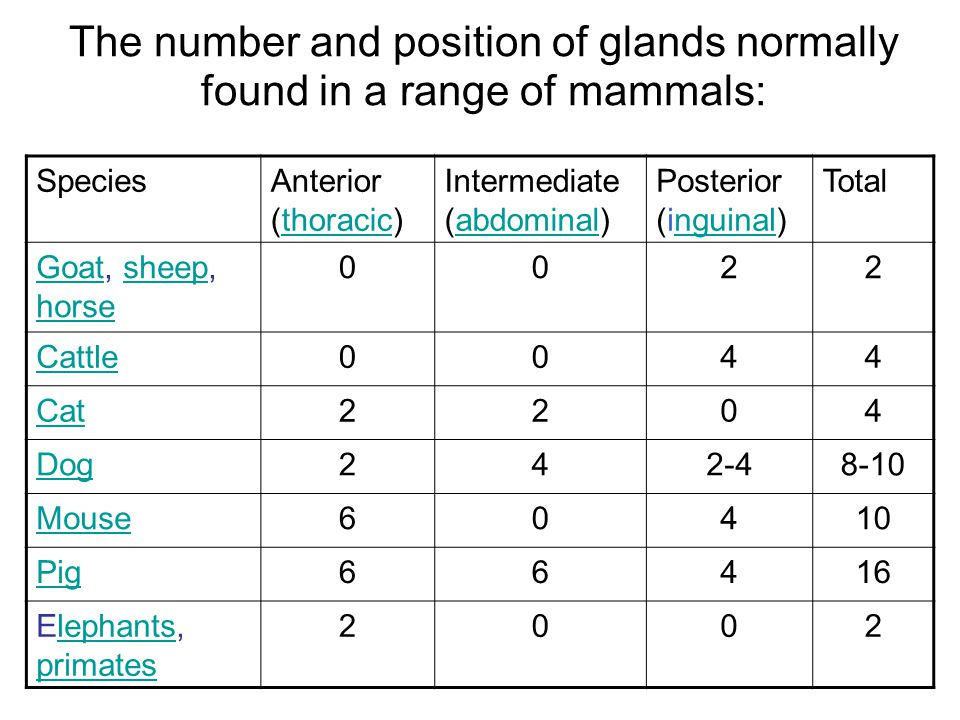 The number and position of glands normally found in a range of mammals: