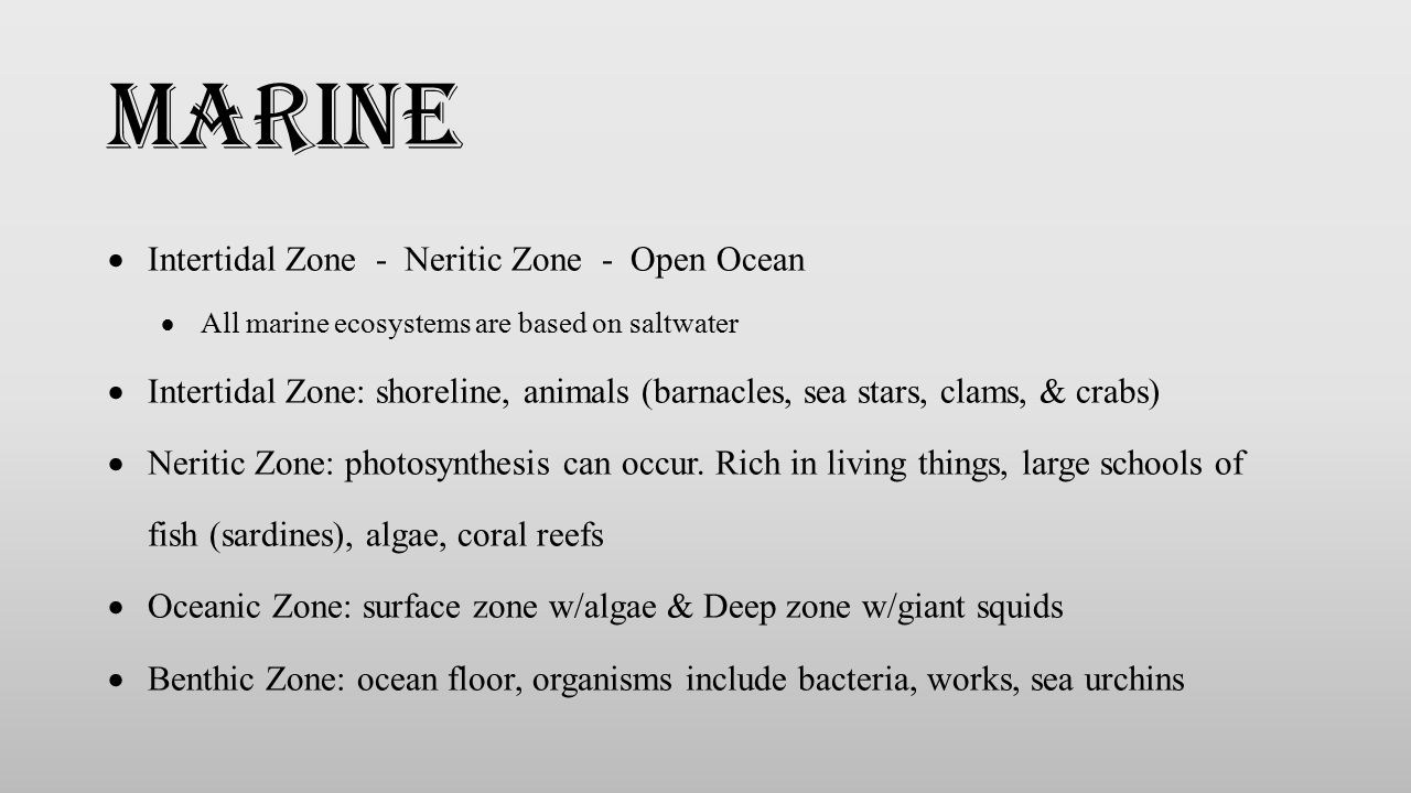 marine Intertidal Zone - Neritic Zone - Open Ocean