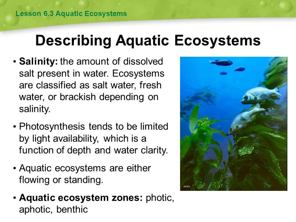 Describing Aquatic Ecosystems