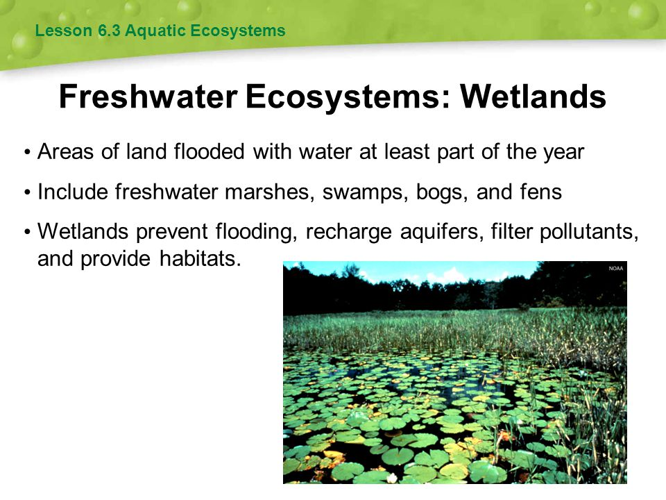Freshwater Ecosystems: Wetlands