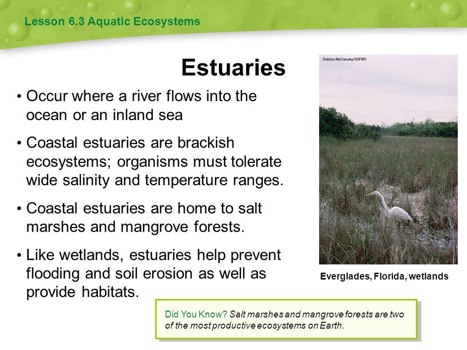 Estuaries Occur where a river flows into the ocean or an inland sea