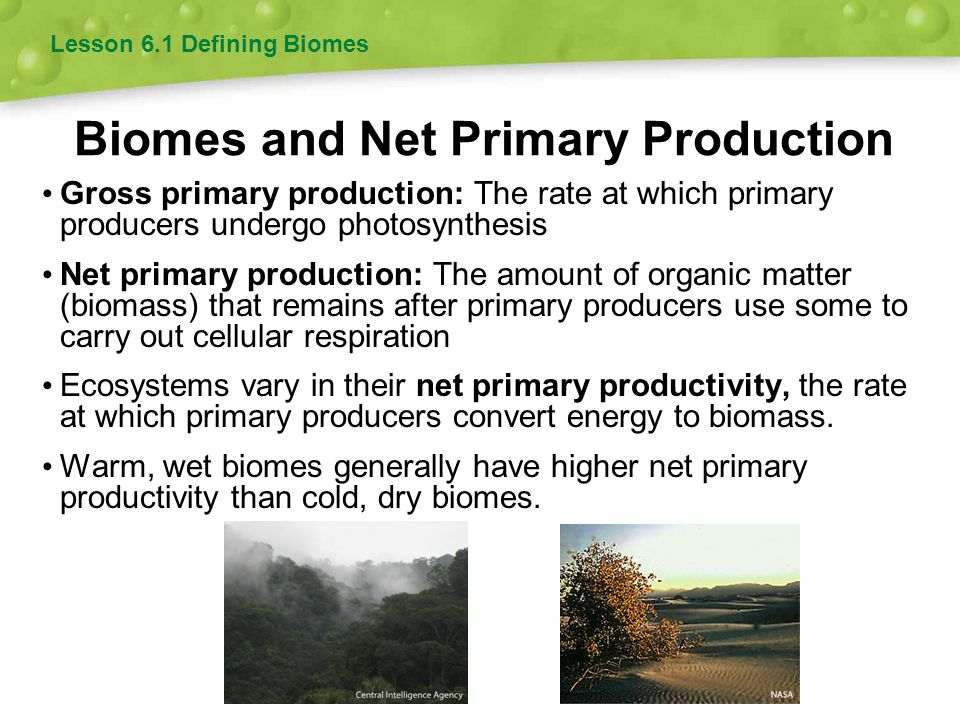 Biomes and Net Primary Production