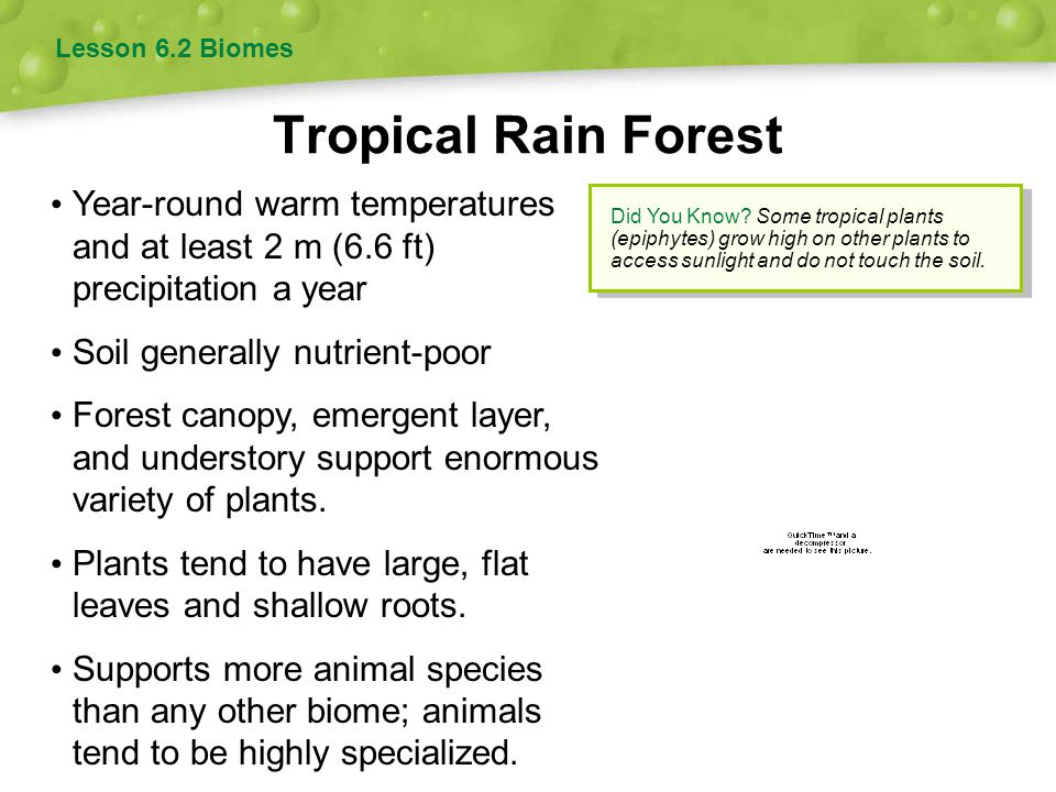 Lesson 6.2 Biomes Tropical Rain Forest. Year-round warm temperatures and at least 2 m (6.6 ft) precipitation a year.