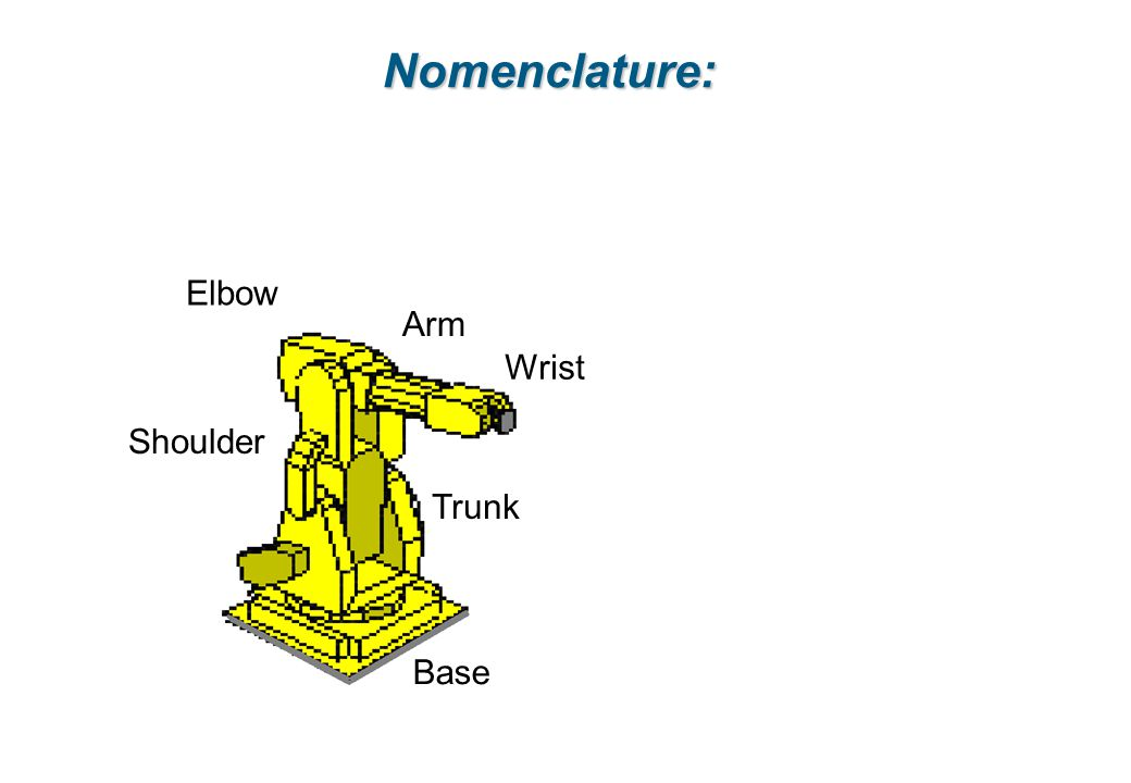 Nomenclature: Elbow Arm Wrist Shoulder Trunk Base