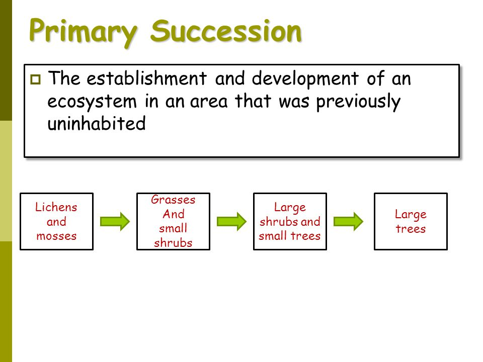Primary Succession The establishment and development of an ecosystem in an area that was previously uninhabited.