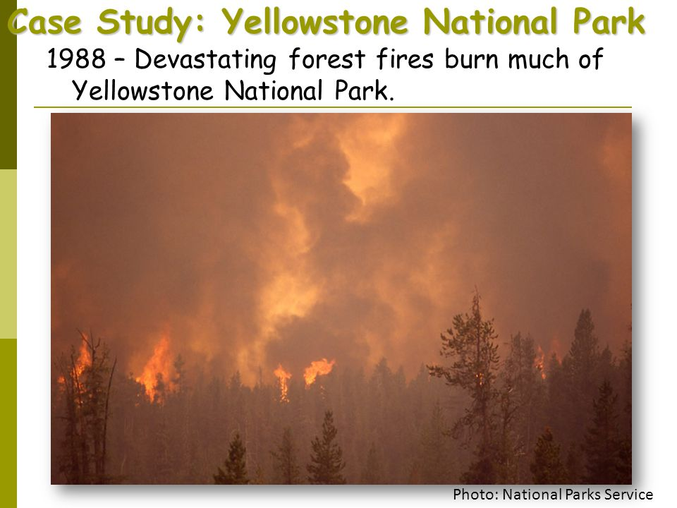 Case Study: Yellowstone National Park